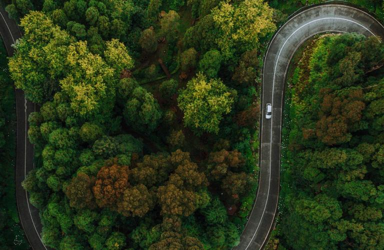 Image of a car driving along a windy road through a forest.