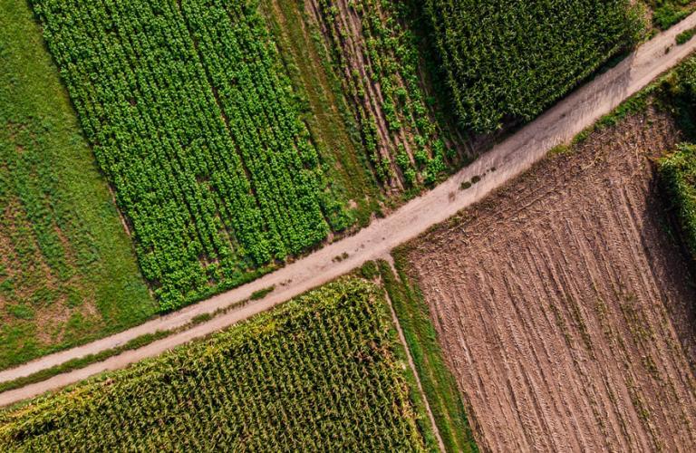 Farmland Fields Arial View